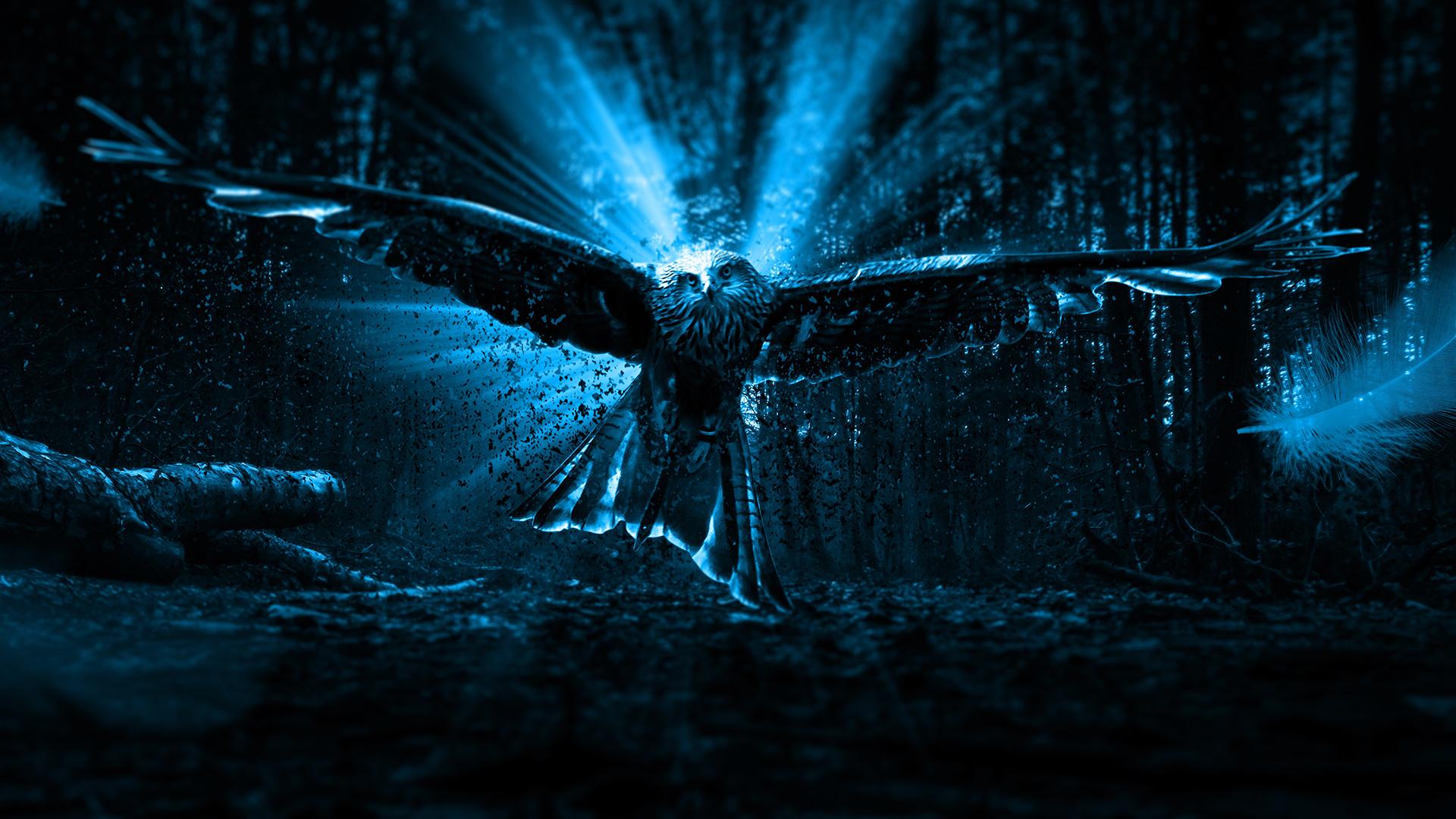 4k Adler Owl Wallpaper Hd