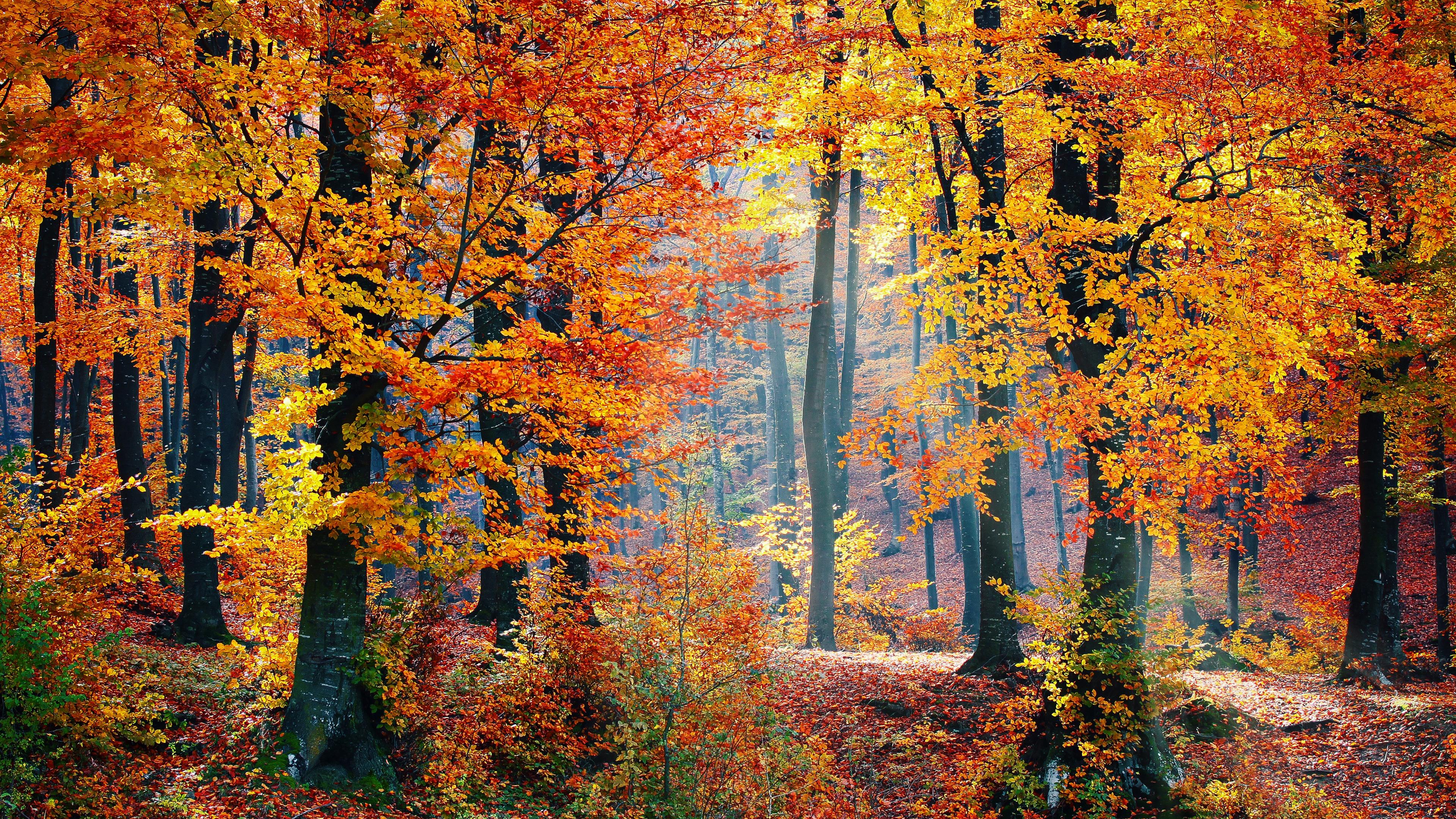 4k Autumn Woods Wallpaper Hd