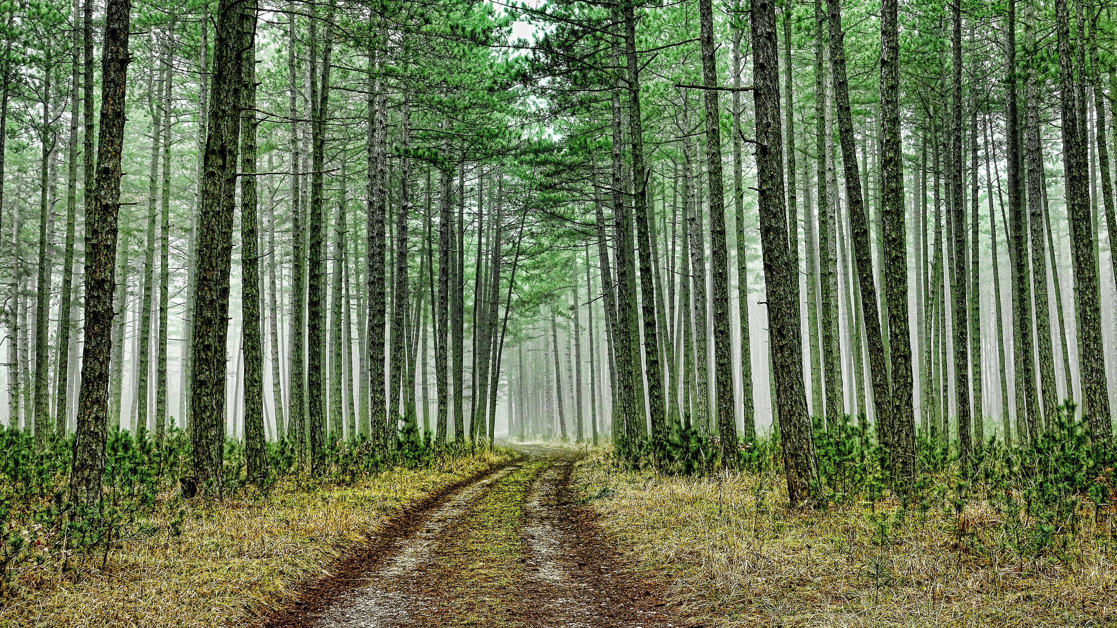 4k Green Forest Road Wallpaper Hd
