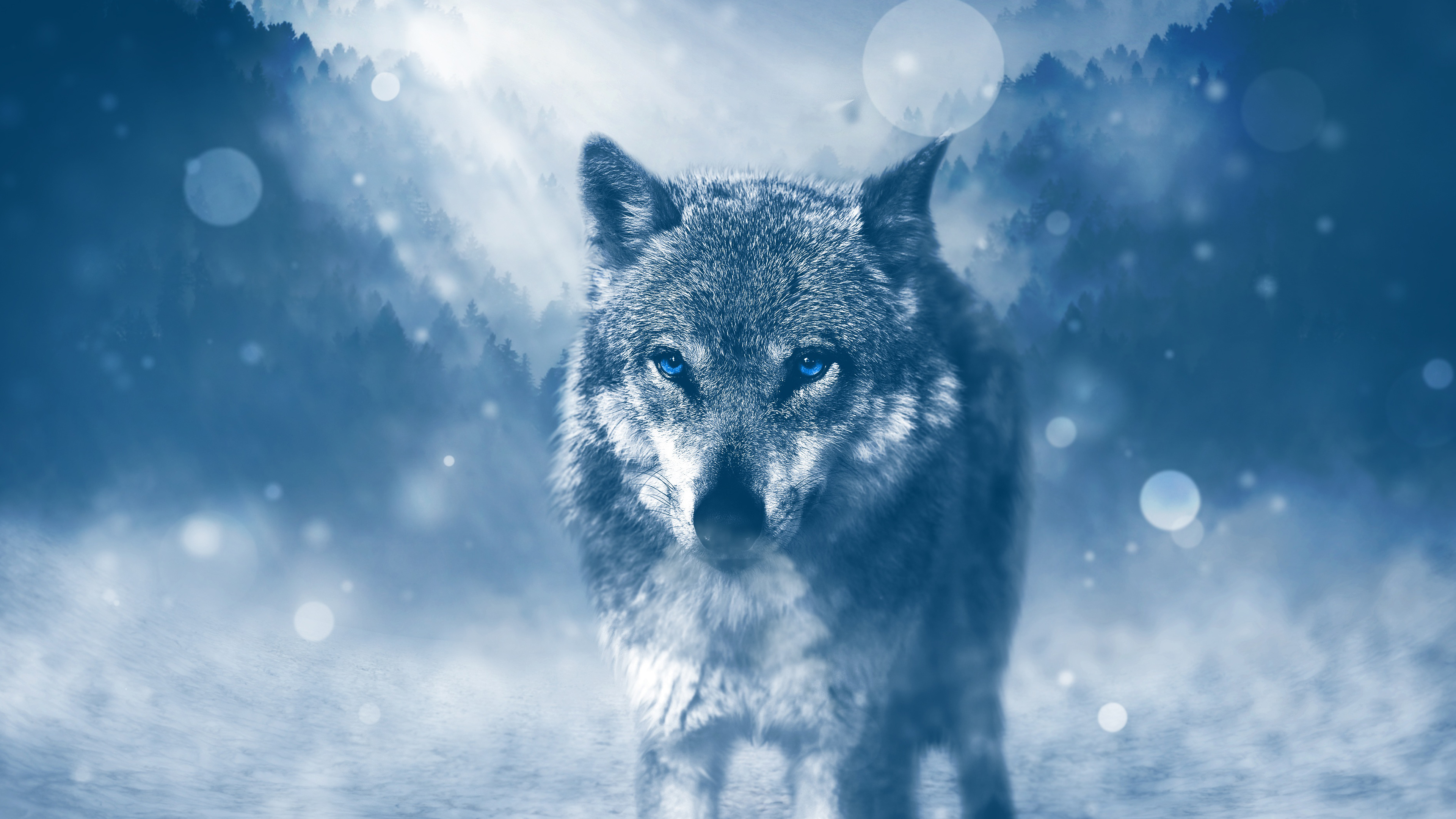 Lone Wolf Desktop Background .
