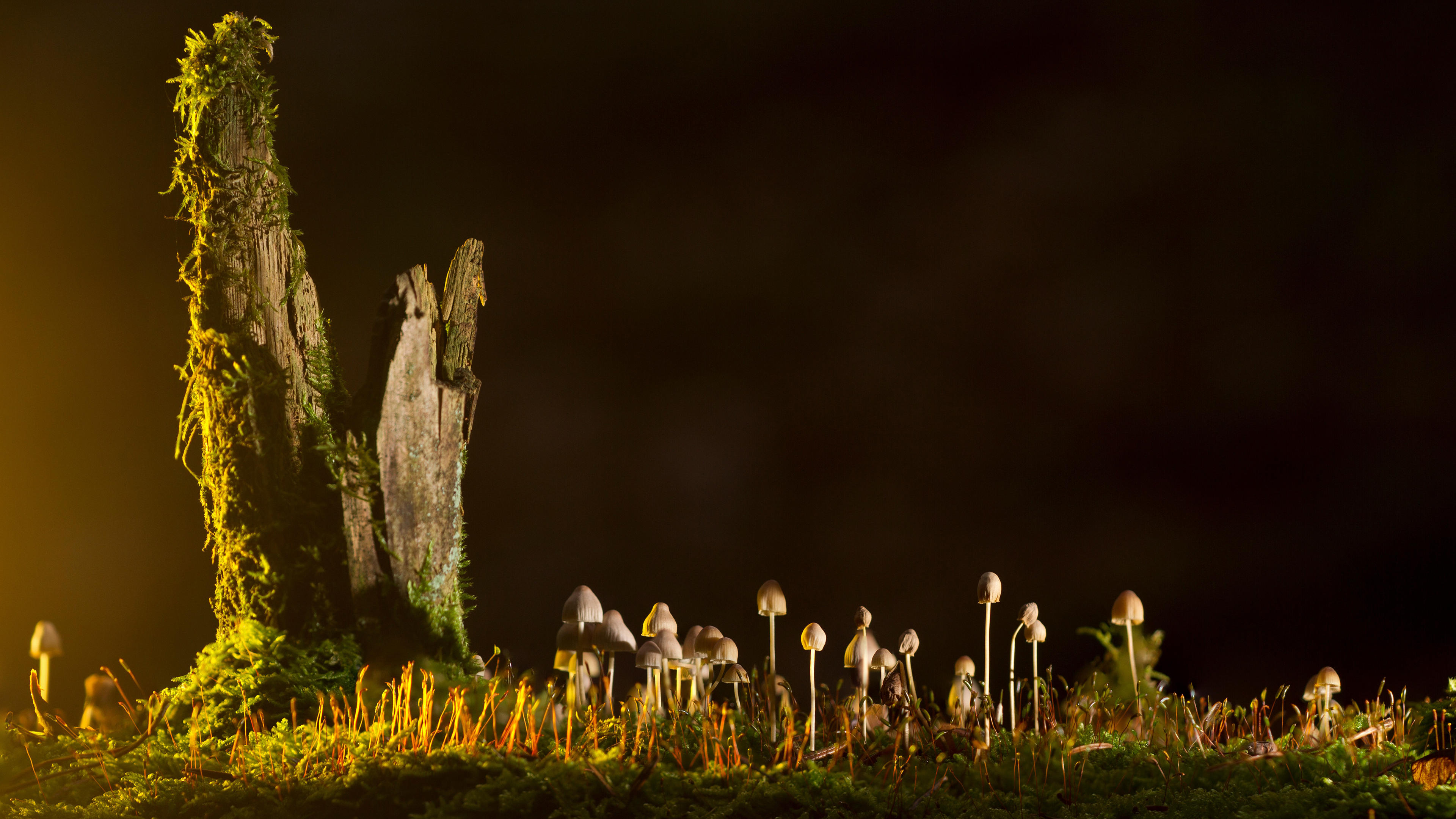 Mushrooms Desktop Background Uhd 4k 3840 X 2160 Px