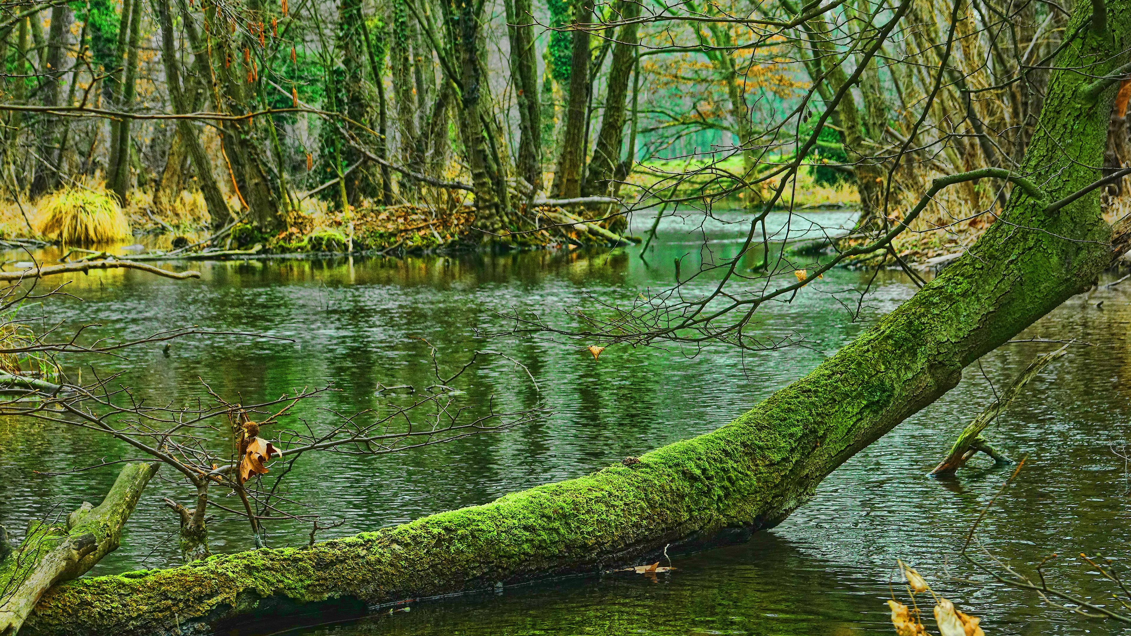 4k Swamp Trees Wallpaper Hd