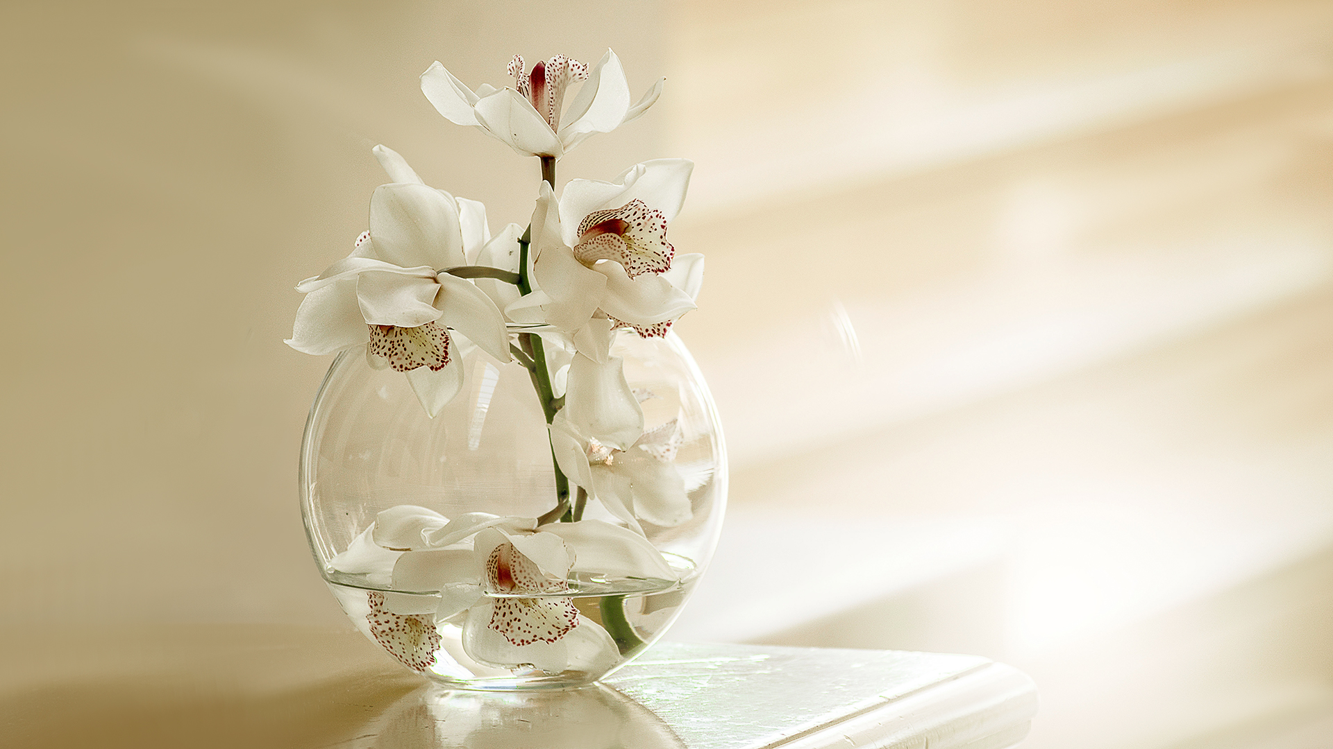 White Orchid Flowers Laptop Background