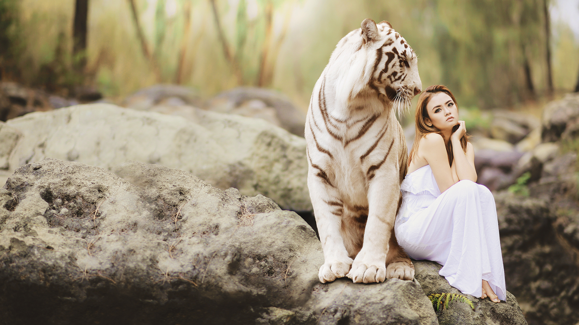 4k White Tiger 4k Wallpaper Hd