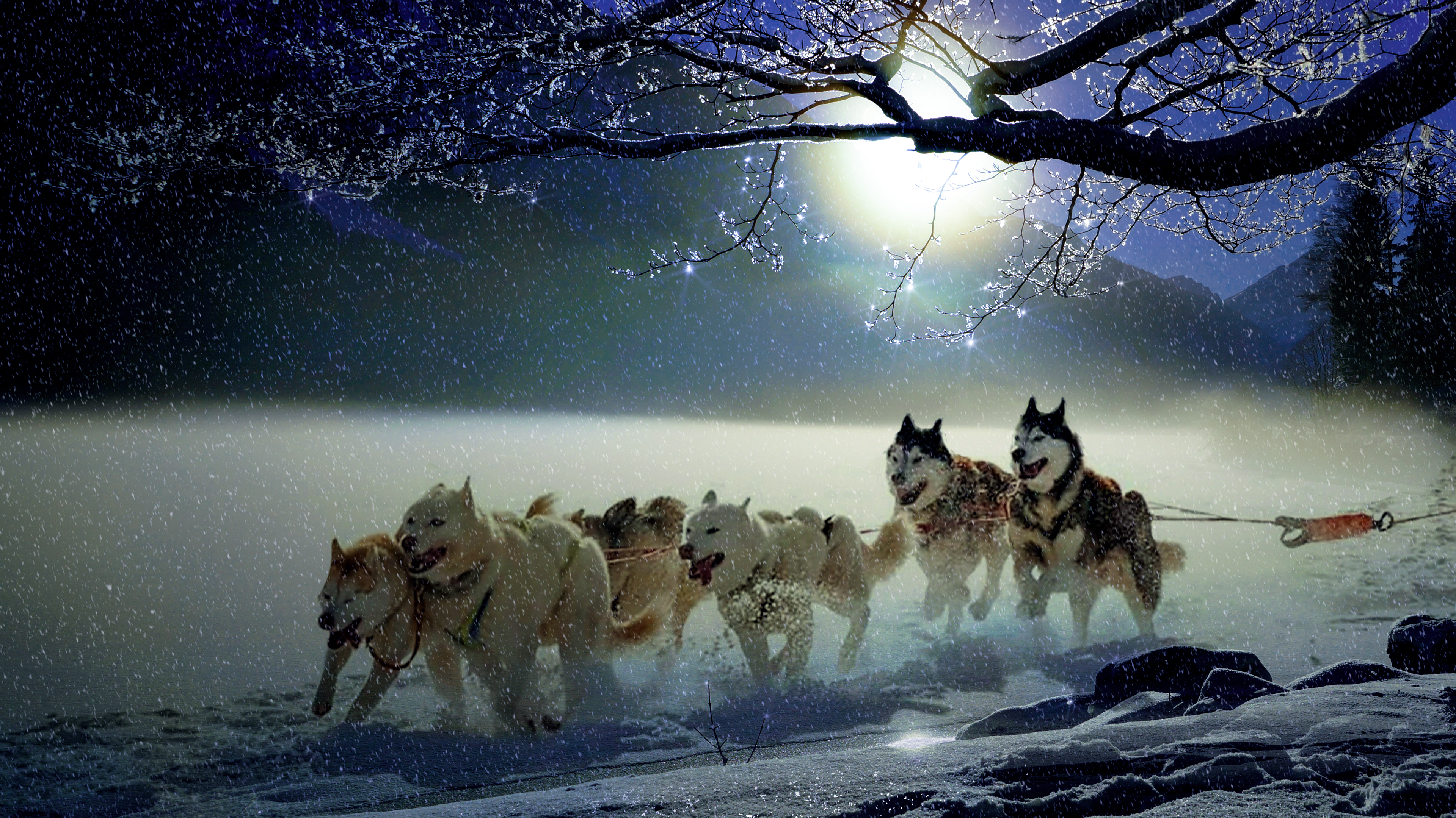 4k Winter Dogs Wallpaper Hd