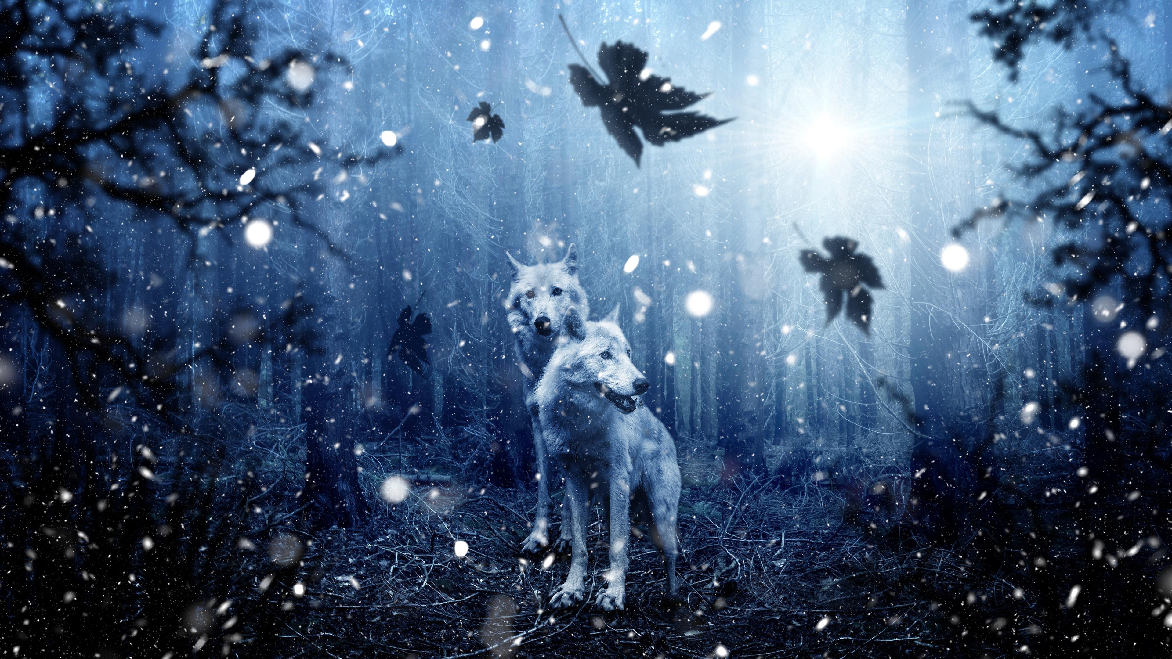 4K Winter Wolves Wallpaper HD