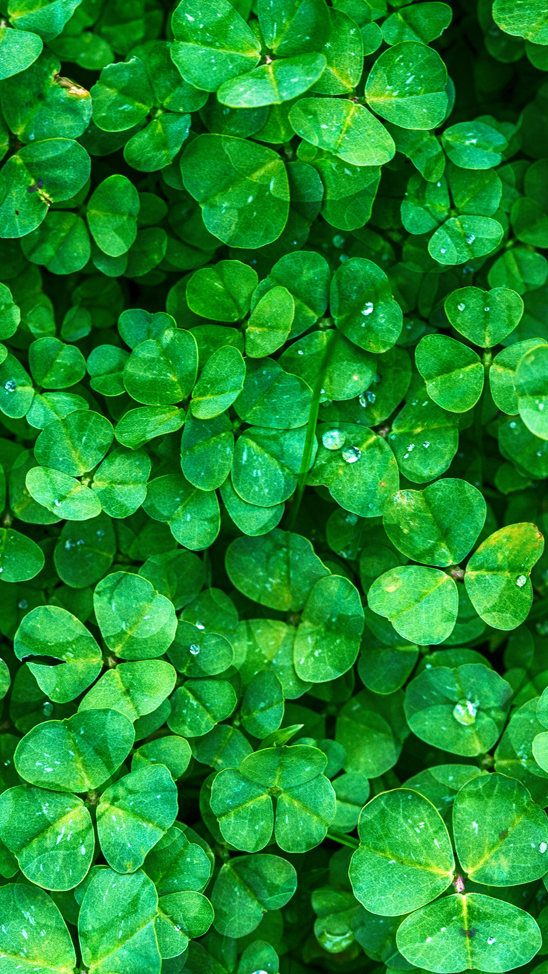 Clover Iphone Background