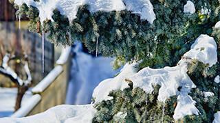 Christmas Snow 4k