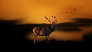 deer at dusk wallpaper