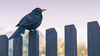 definitely a sitting bird wallpaper