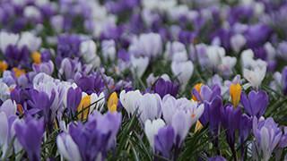 Flower Field 4k