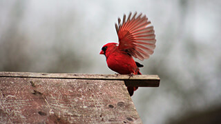 flying or sitting bird wallpaper