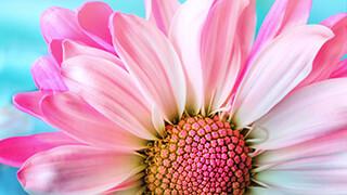 Milkshake Flower