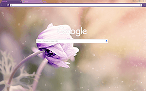 Anemone Flower Google Chrome Theme
