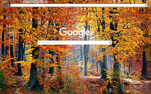 Autumn Woods Google Chrome Theme