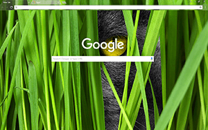 Big Cat Google Chrome Theme