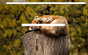 Brown Fox Google Chrome Theme
