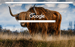 Bull Google Chrome Theme