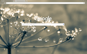 Cobweb Google Chrome Theme