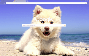 Cute Beach Puppy Google Chrome Theme