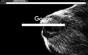 Dog Nose Google Chrome Theme
