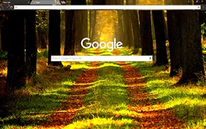 Forest Way Google Chrome Theme