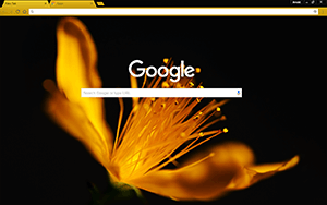 Golden Flower Google Chrome Theme