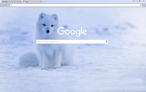 Iceland Fox Google Chrome Theme