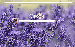 Lavender Blossom Google Chrome Theme