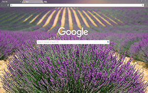 Lavender Google Chrome Theme