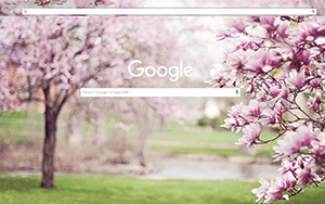 Magnolia Trees Google Chrome Theme
