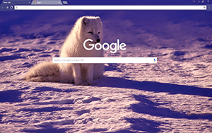 Norway Google Chrome Theme