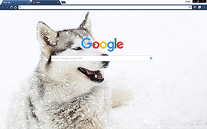 Siberian Husky Dog Google Chrome Theme