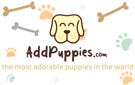 AddPuppies - The Most Adorable Pictures Of Puppies