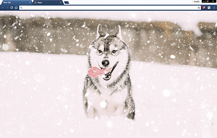 Husky Puppy In Snow Chrome Theme