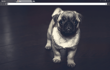 Pug Puppy Chrome Theme