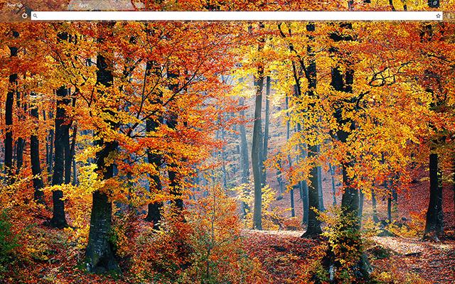 Autumn Woods Google Chrome Theme