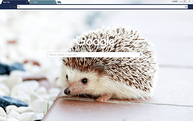 Baby Hedgehog Google Theme