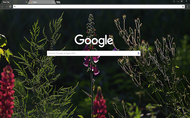 Free Beauty Google Chrome Theme