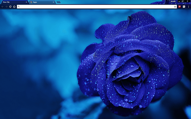 Blue Rose Google Chrome Theme