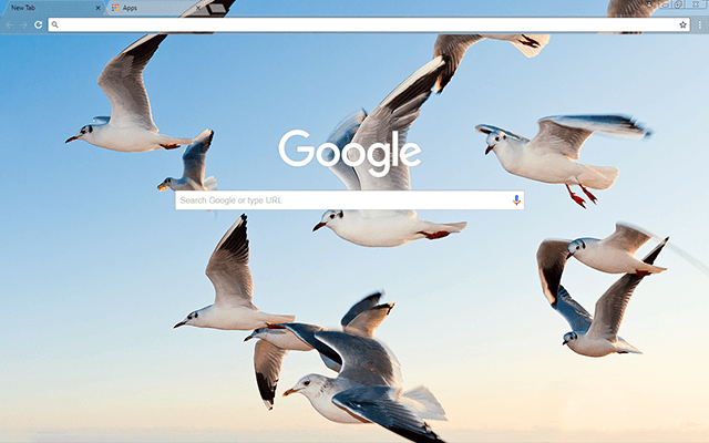 Gulls Google Chrome Theme