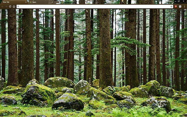 Mystery Forest Google Chrome Theme