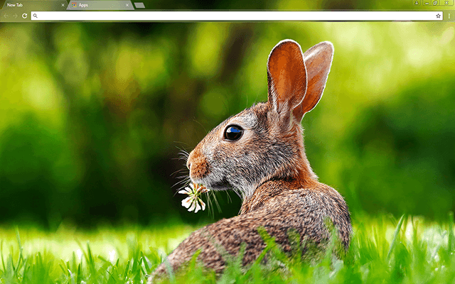 Rabbit Google Chrome Theme