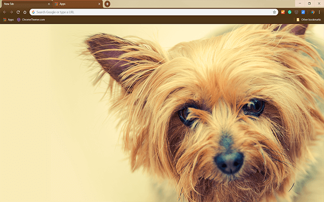 Silky Terrier - HD Background