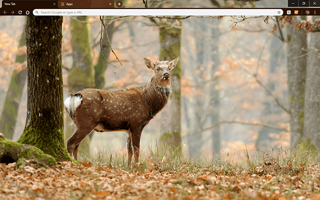 Whitetail Deer - HD Background