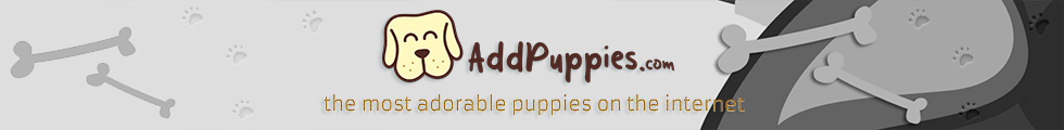 AddPuppies - The Most Adorable Puppies On The Internet