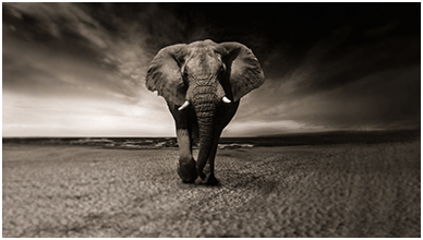 African Elephant 4K ChromeBook Wallpaper