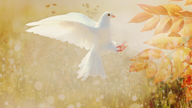 Autumn Dove Google Background