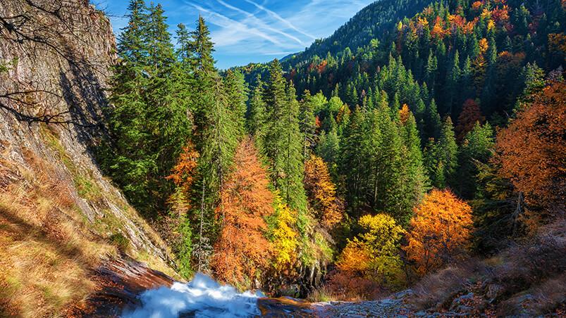 Autumn Forest Google Background ...
