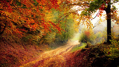 Autumn Road Chromebook Wallpaper